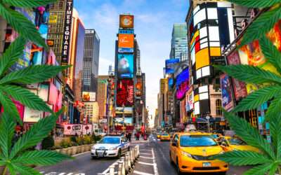 New York legalizes the use for recreational purposes